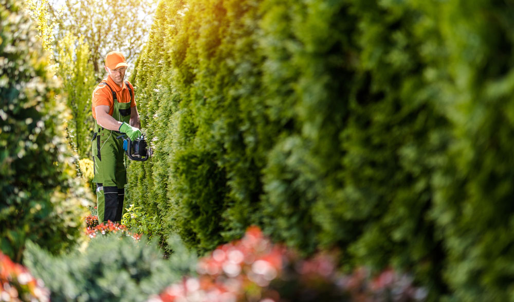 commercial-hedge-cuitting